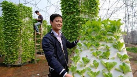"""浙江农民发明""""空气种菜"""", 1.5平米种出390棵菜, 产量直接翻5倍!"""