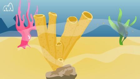 海绵是动物还是植物? 「米粒计划亲子百科系列」