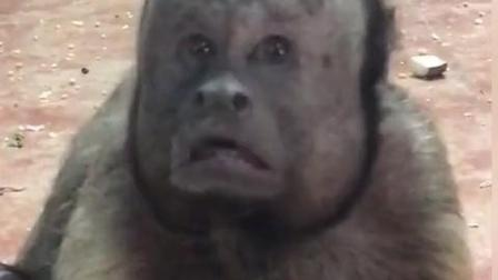这猴子肯定没女票!