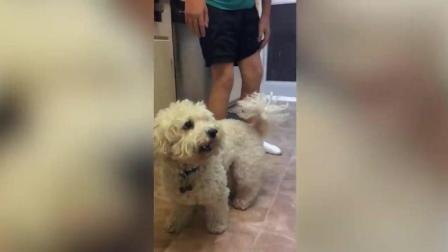 搞笑动物: 慢镜头, 狗狗玩球的神反应