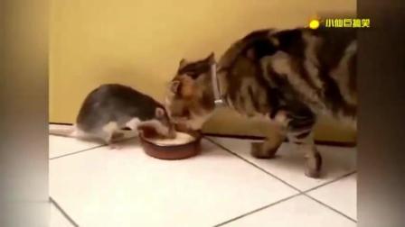 猫和老鼠不得不说的故事 现实版的汤姆和杰瑞