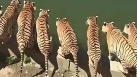 沉迷吸猫之搞笑动物: 这就是传说中的虎视眈眈吧