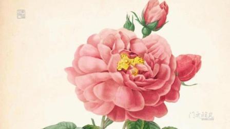 古代字画-皮埃尔.约瑟夫·雷杜德的植物图谱.GMZM.ORG光明之门出品