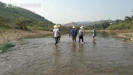 农村小伙用清塘网到河边赶鱼, 场面太壮观,