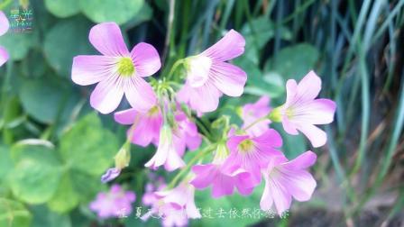 很甜蜜的情歌《粉红色的回忆》韩宝仪经典歌曲