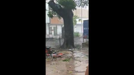 """台风""""山竹""""来了, 刮到了车辆大树和行人"""