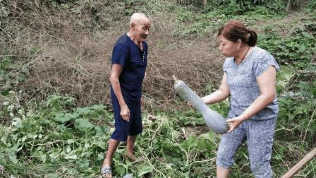 农村阿姨种50根南瓜藤没结一个? 拔藤的时候意外发现两个, 真开心