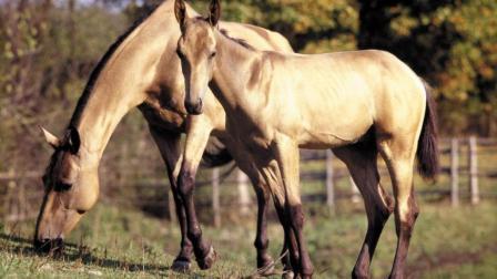两匹强壮的马打架, 连踢带咬, 非常激烈!
