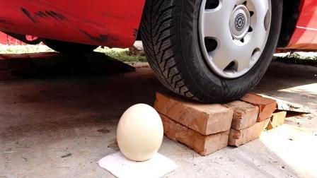 以坚固著称的鸵鸟蛋, 被汽车轧过会发生什么?
