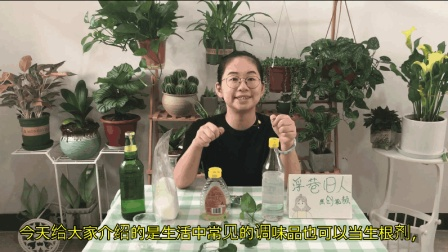 还在用生根粉扦插吗? 试试这些生活中常见的调味品, 生根效果很好!
