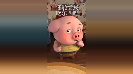 探探猫搞笑小剧场: 豆豆猪又来撒娇求零食了, 你