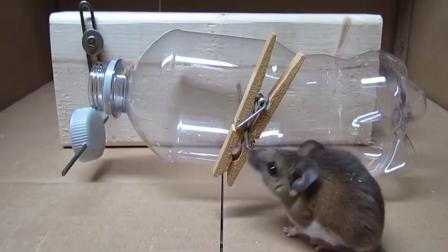 牛人设计的这个捕鼠装置, 哈哈