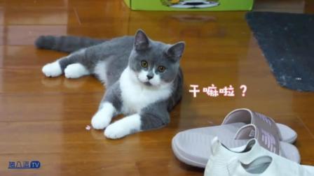 猫咪搞笑视频大合集41