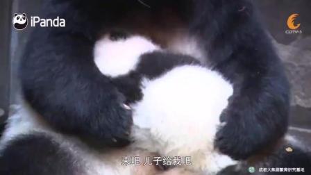 蜂蜜换大熊猫幼崽已成业内公开秘密