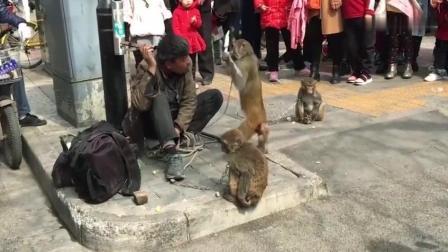 河南牛人在街头耍猴, 猴子却拿刀攻击主人, 场面