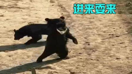 搞笑动物: 小熊开店为了拉客也是拼了, 这舞姿