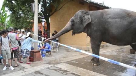 熊孩子给大象吃饼干, 饲养员当场就发火了!