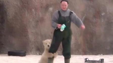 会抱大腿的不只有大熊猫, 北极熊小小年纪也ge