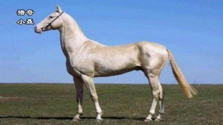 超高颜值, 被称为来自天堂的马, 一匹比十辆法拉