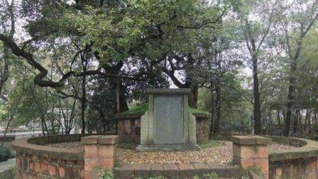 盗墓界流传一禁忌, 看到墓前有柳树就躲避, 只因柳树神秘用途
