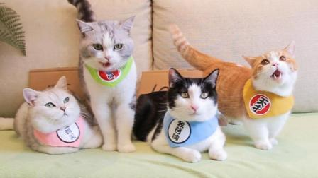 橘猫太能吃导致破产, 铲屎官不得不卖猫, 一块钱一斤有人要买吗?