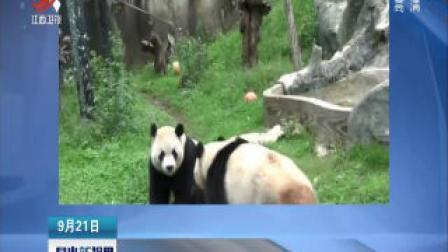 【中秋来了】云南: 熊猫吃月饼 山魈吃拼盘