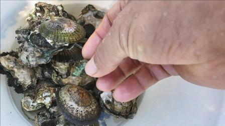 住海边的好处, 礁石上走一走就能摸到许多生蚝和海螺!