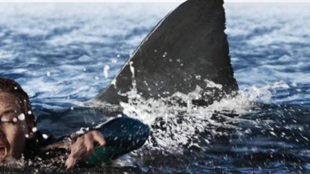 大堡礁惊魂(下): 一群人在海中迷失方向, 接连遭受鲨鱼攻击
