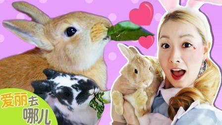 [爱丽去哪儿] 少女心爆棚的萌兔子咖啡店 | 爱丽去哪儿