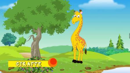 动物奇观 长颈鹿 Giraffe