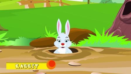 兔子 Rabbit