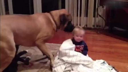 当狗狗遇见小主人之后, 萌化了