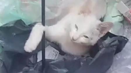 """校方通报""""武汉大一新生带弓箭射杀流浪猫"""""""