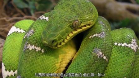 你知道世界上最美的毒蛇分别都来自哪里吗?