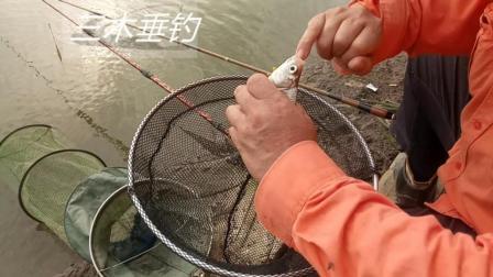长江不是小水洼, 桂鱼、鲫鱼、麦穗、翘嘴全都有! 瞧! 武汉钓友又上一尾鳊鱼!