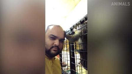 搞笑动物: 猴子都有审美了, 光头好丑, 离我远一