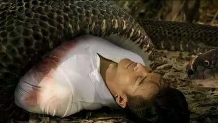 小伙想杀掉巨蛇, 却反被巨蛇咬死! -蛇姬恋