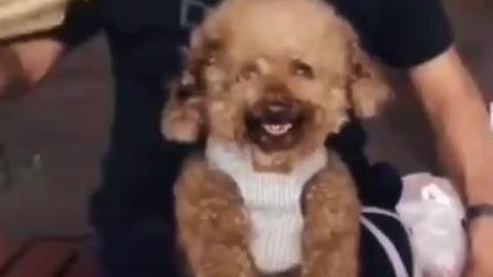 奇闻, 小狗笑容跟人类笑容如出一辙, 可爱得好想
