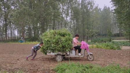 农村小伙去地里收花生, 这是开的啥车啊? 装那么一点花生都拉不动