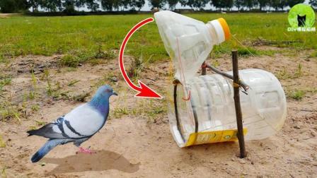 高人用塑料桶做捕鸟陷阱, 上钩率百分百, 抓紧时间来学