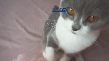猫咪搞笑视频大合集56