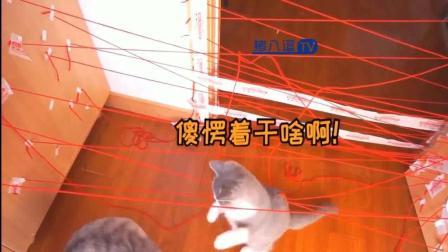 猫咪搞笑视频大合集57