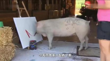 """它是全球唯一一只会画画的猪, 称之为猪界""""毕加"""