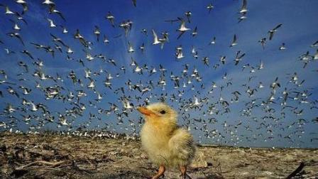 这只鸭子离奇死亡, 摄影师把镜头放慢六倍才知道