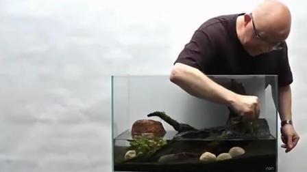 老外制作的水族箱, 观赏鱼在里面生活的很愉快