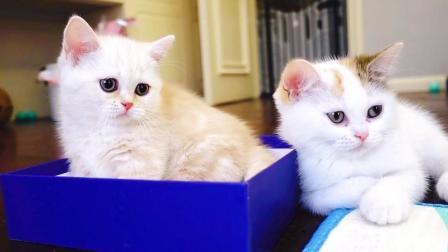 中秋节主人给小猫咪们精心准备了礼物: 月饼拿走, 宝宝只要盒子!