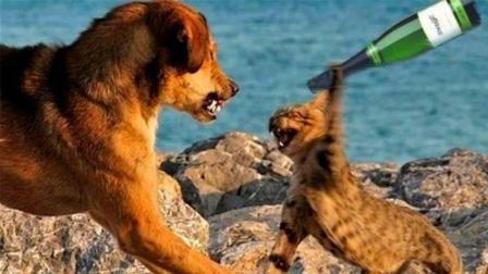 猫狗大战: 看那些汪汪的猫主子