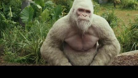 狂暴巨兽中猩猩的搞笑手语, 看了莫名戳中笑点。