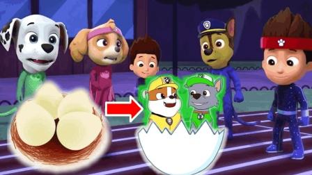 越看越奇怪! 汪汪汪在围观什么? 为何鸡蛋孵出狗狗巡逻队?