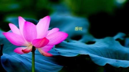 轻音乐欣赏: 清涤心灵的禅音——《明镜菩提》, 心灵瞬间平静